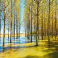 Sotos del río Ebro